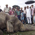 Un rayo mató a 18 elefantes en el noroeste de la India
